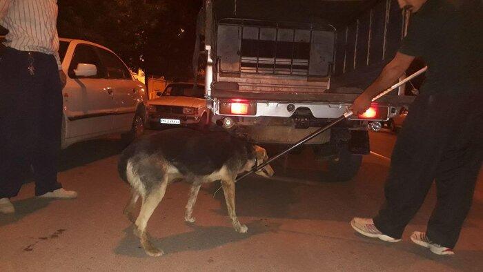 سگ ها جنازه پسر 11 ساله اردبیلی را خوردند
