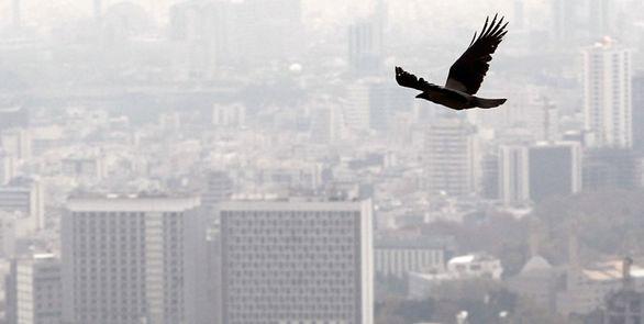 مدیرکل هواشناسی تهران: غلظت آلایندههای جوی از فردا افزایش مییابد