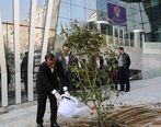 کاشت نهال توسط مدیرعامل بورس تهران در آستانه روز درختکاری