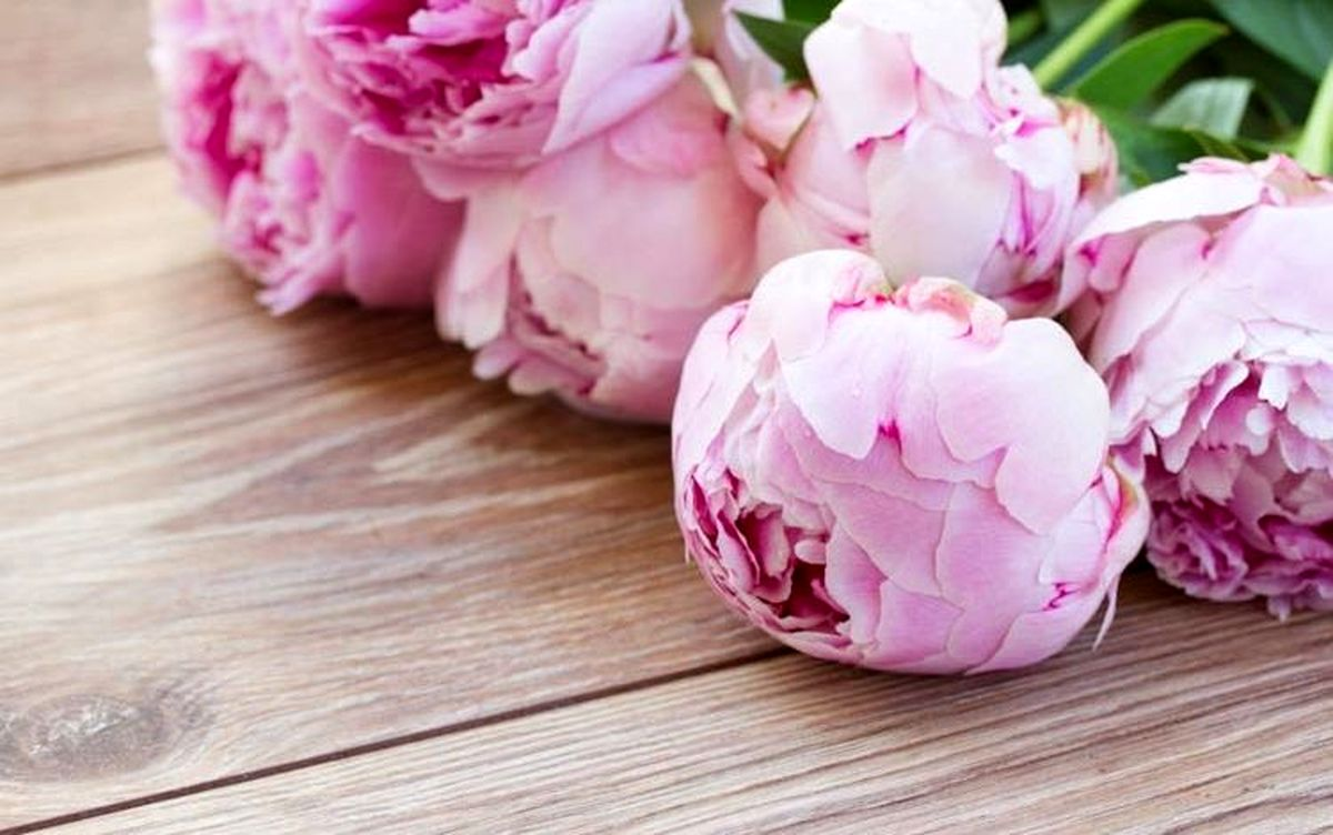 معجزه ای به نام گل صد تومانی چینی آیا صحت دارد؟
