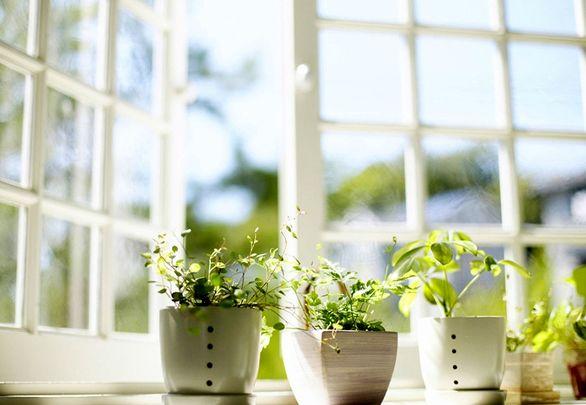 راهکارهایی برای بهتر نفس کشیدن در محیط خانه