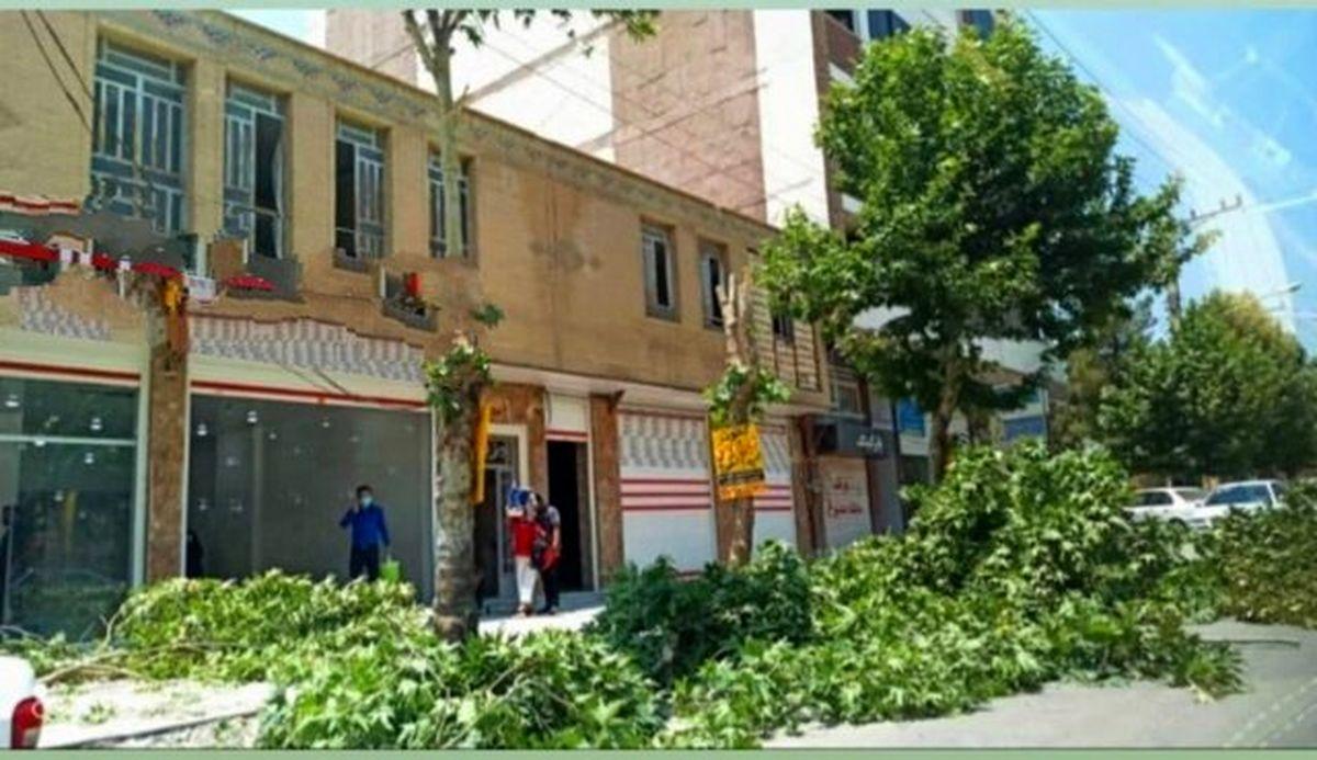 توضیحات مسئولان در خصوص قطع درختان خیابان معلم یاسوج + عکس