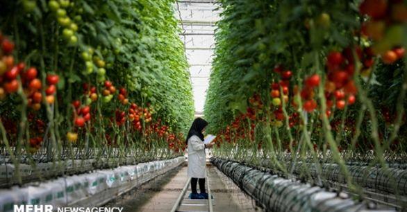 افزایش 1000 هکتاری مساحت گلخانه های کشور