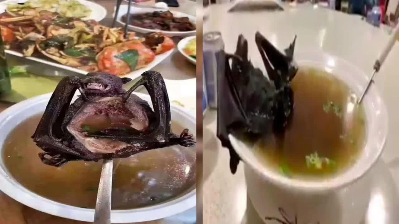 سوپ خفاش