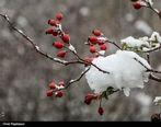پیشبینی برف و باران ۲روزه در برخی استانها