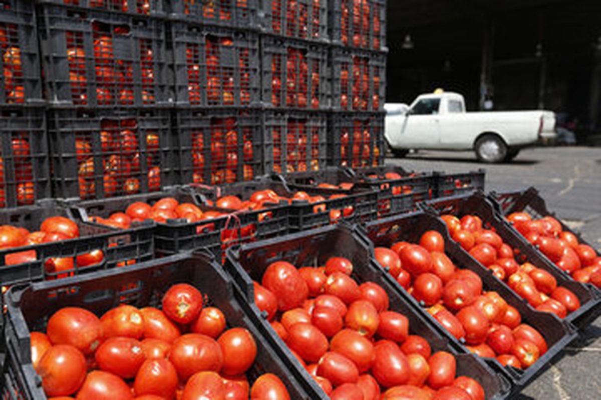 آغاز توزیع گوجهفرنگی ۱۱هزار تومانی