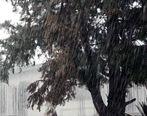 اخطاریه فوری سازمان هواشناسی