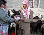 صدور مجوز خروج دام زنده از سیستان و بلوچستان