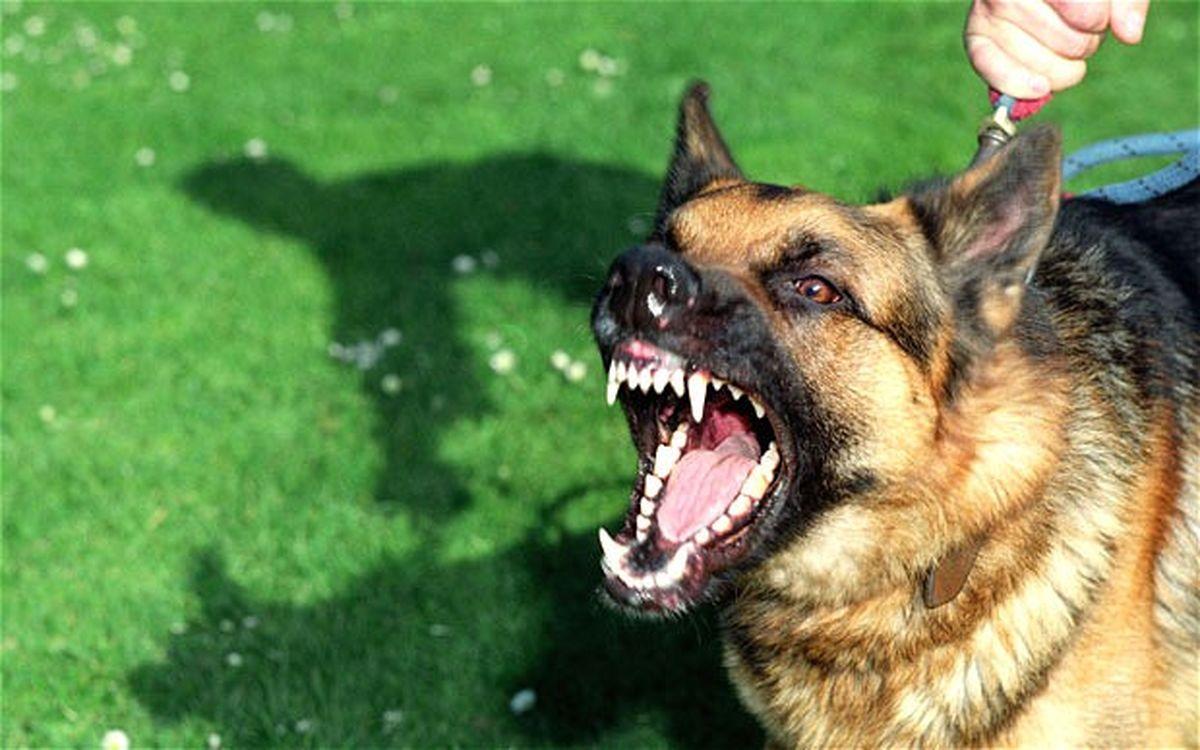 فیلم حمله وحشتناک سگ به عابر پیاده + عکس