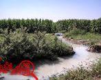 آبیاری با آب فاضلاب 30 کشاورز یک روستا در گلستان را مسموم کرد