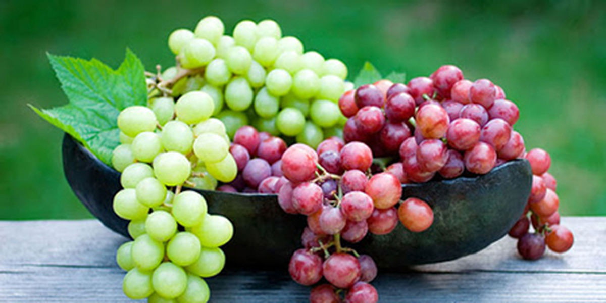 فواید انگور برای رشد و تقویت مو