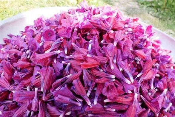 طرز تهیه ساده مربای گل گاو زبان