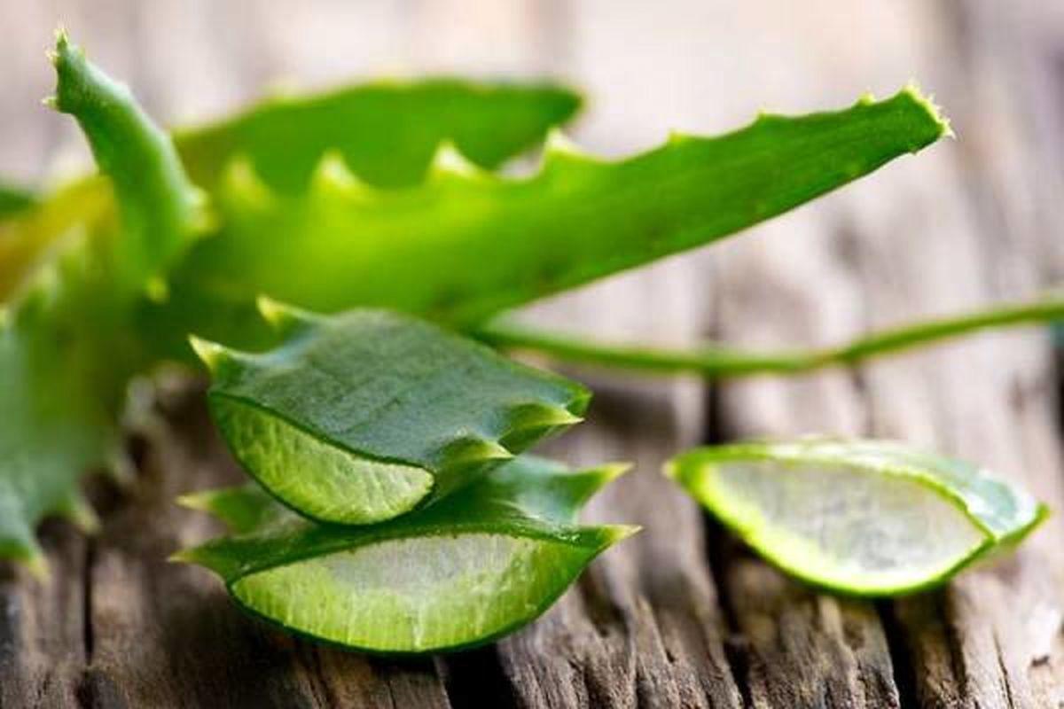 با این گیاه شگفت انگیز گلودرد های مزمن را درمان کنید
