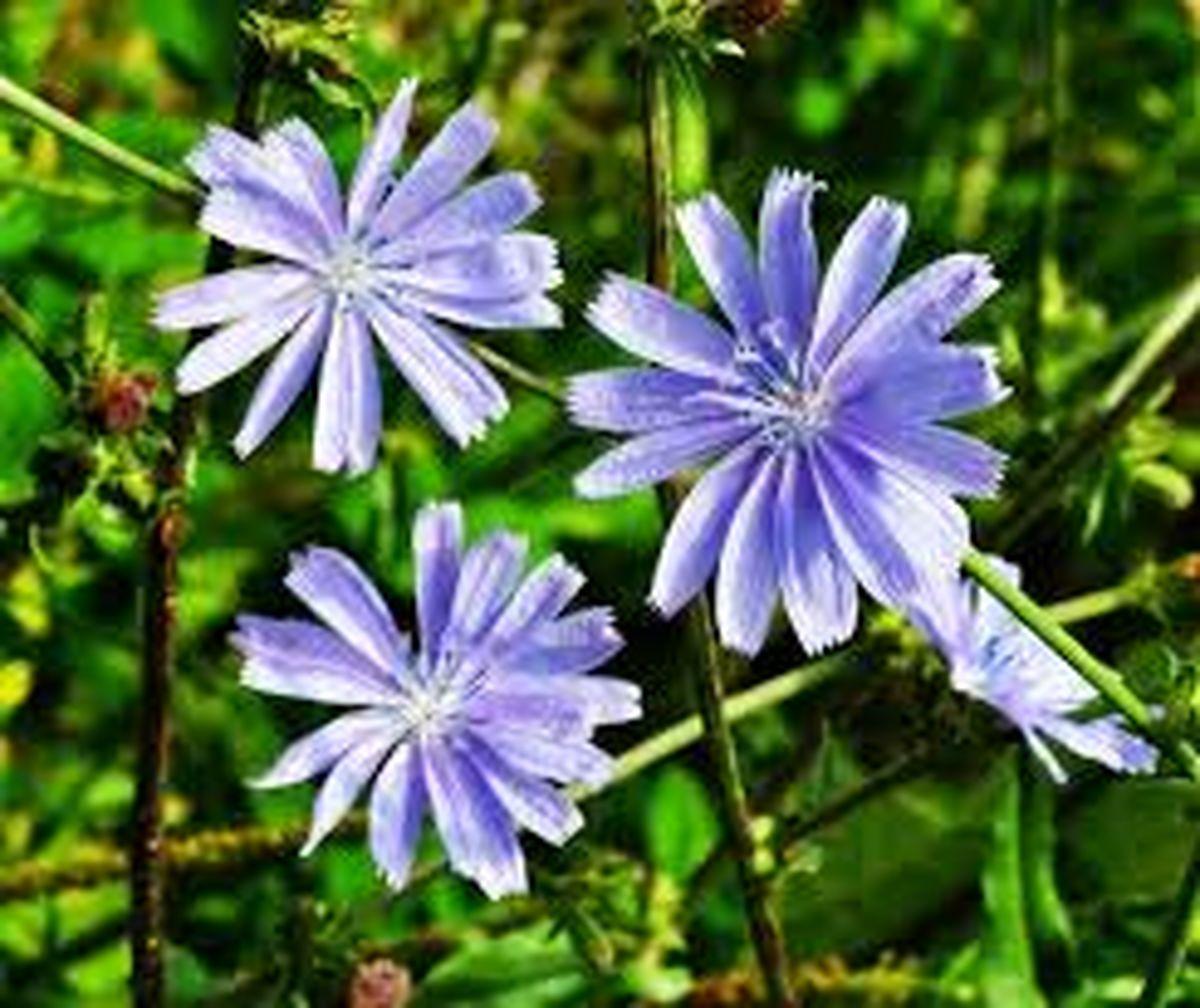 با مصرف این گیاه نوزاد زیبا و خوش چهره به دنیا می آورید!