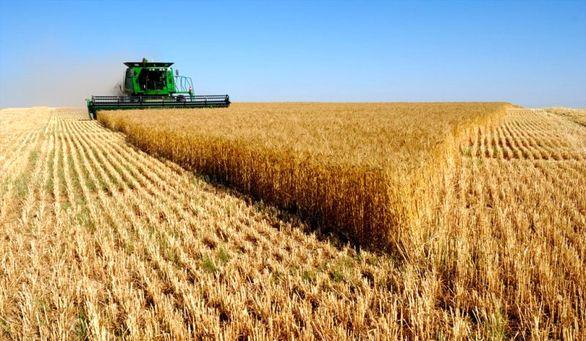 کمبود عرضه کود اوره در آستانه فصل داشت گندم