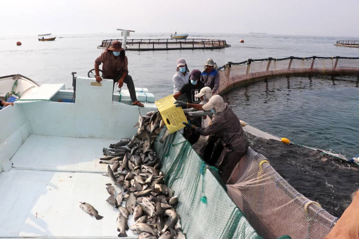 صید 400 تن محصول صادراتی از قشم