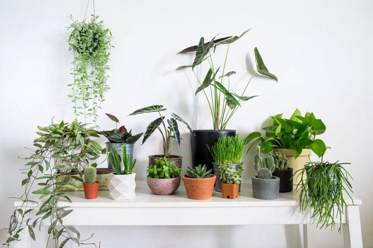 فواید خرید و نگهداری گل و گیاه در خانه