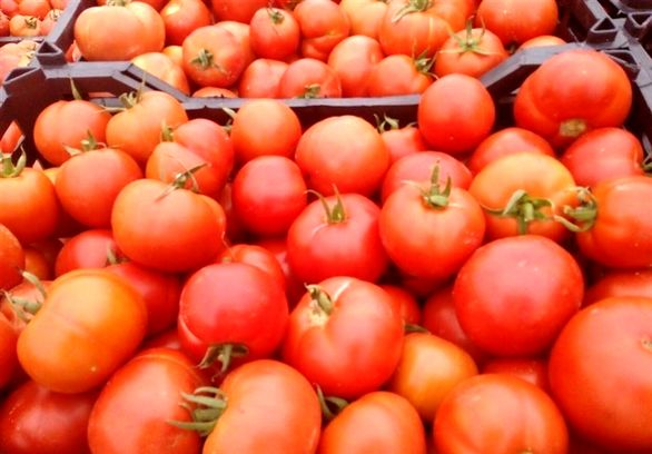 دلیل گرانی گوجه چیست؟