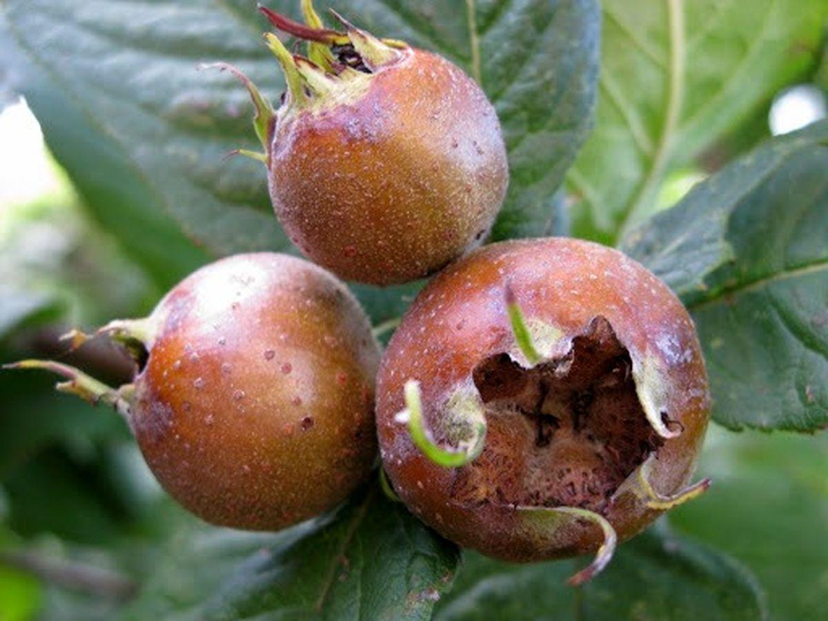 این میوه جادویی می تواند جایگزین ۱۰ قرص کم خونی باشد