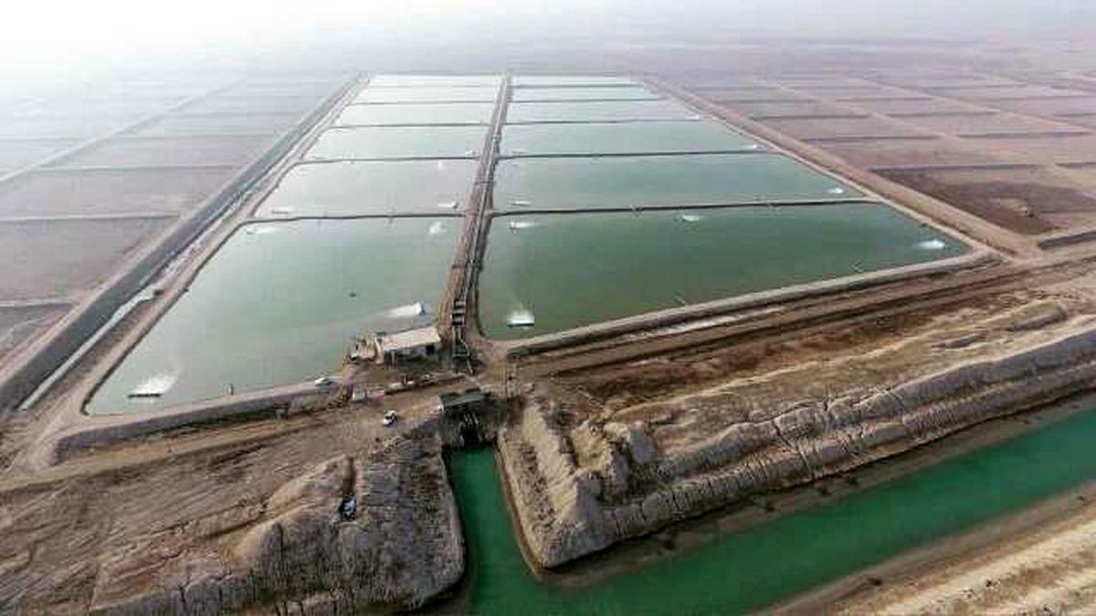 آبگیری چهار مزرعه پرورش میگو در قشم