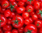 گوجهفرنگی ارزان میشود