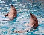 معمای مرگ دلفینها در تهران