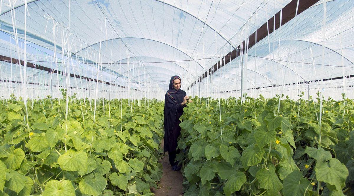 تشکیل ۳ هزار پرونده اشتغال در بانک توسعه تعاون خراسان شمالی