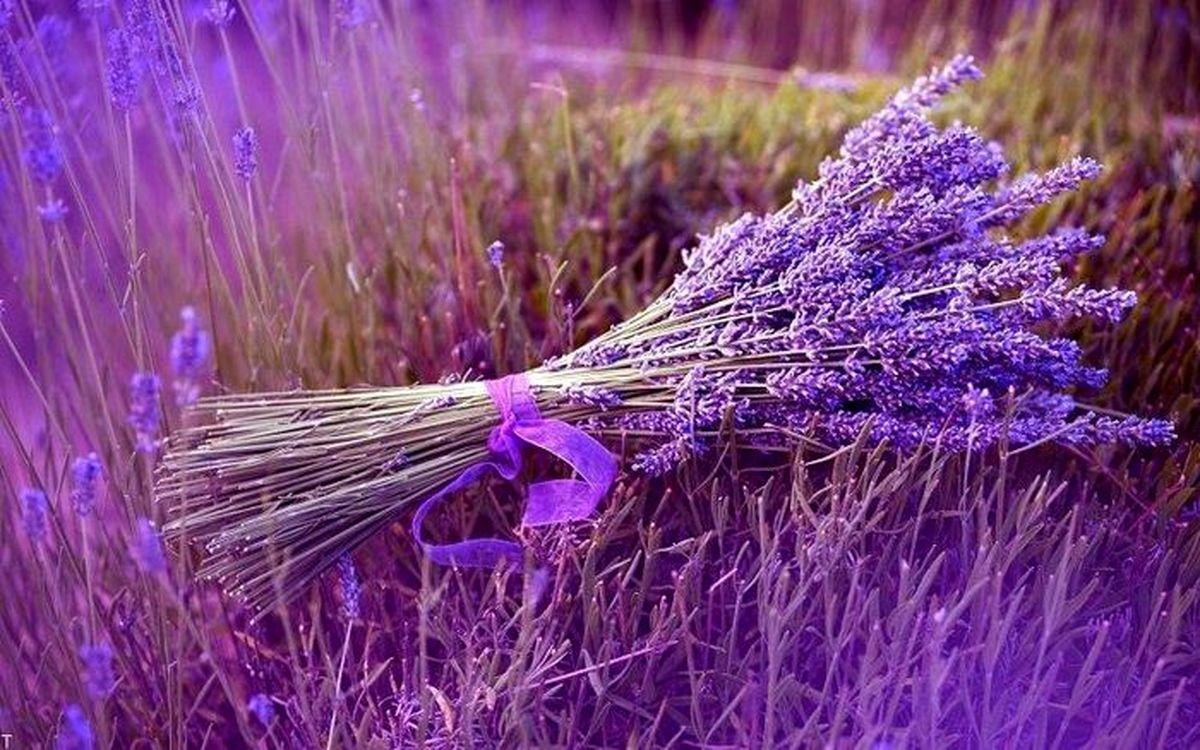 با این گیاهان سلامتی خود را تضمین کنید