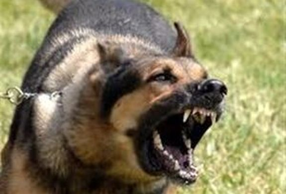 حمله مرگبار سگها به دختر دانش آموز ۹ ساله + فیلم